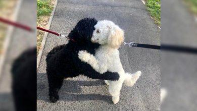 Photo of El tierno reencuentro de un perro con su hermana que emociona a las redes sociales