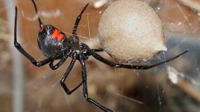 Photo of Tres chicos se dejaron picar por una peligrosa araña porque querían convertirse en Spider-man